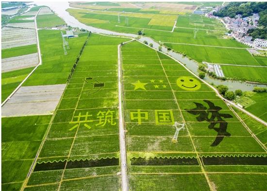 百亩彩稻上 抒写中国梦