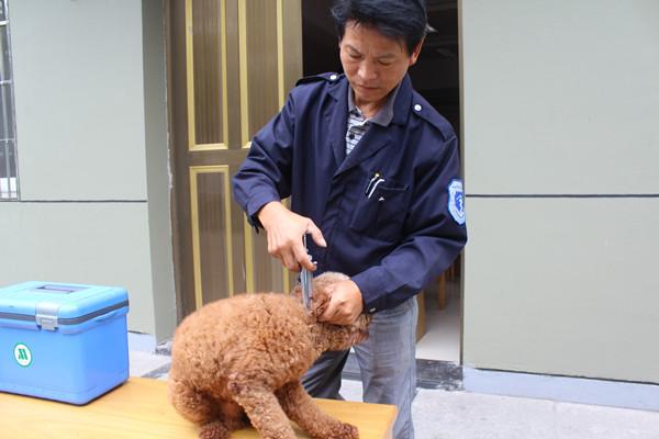 大碶:各社区秋季动物防疫工作全面展开