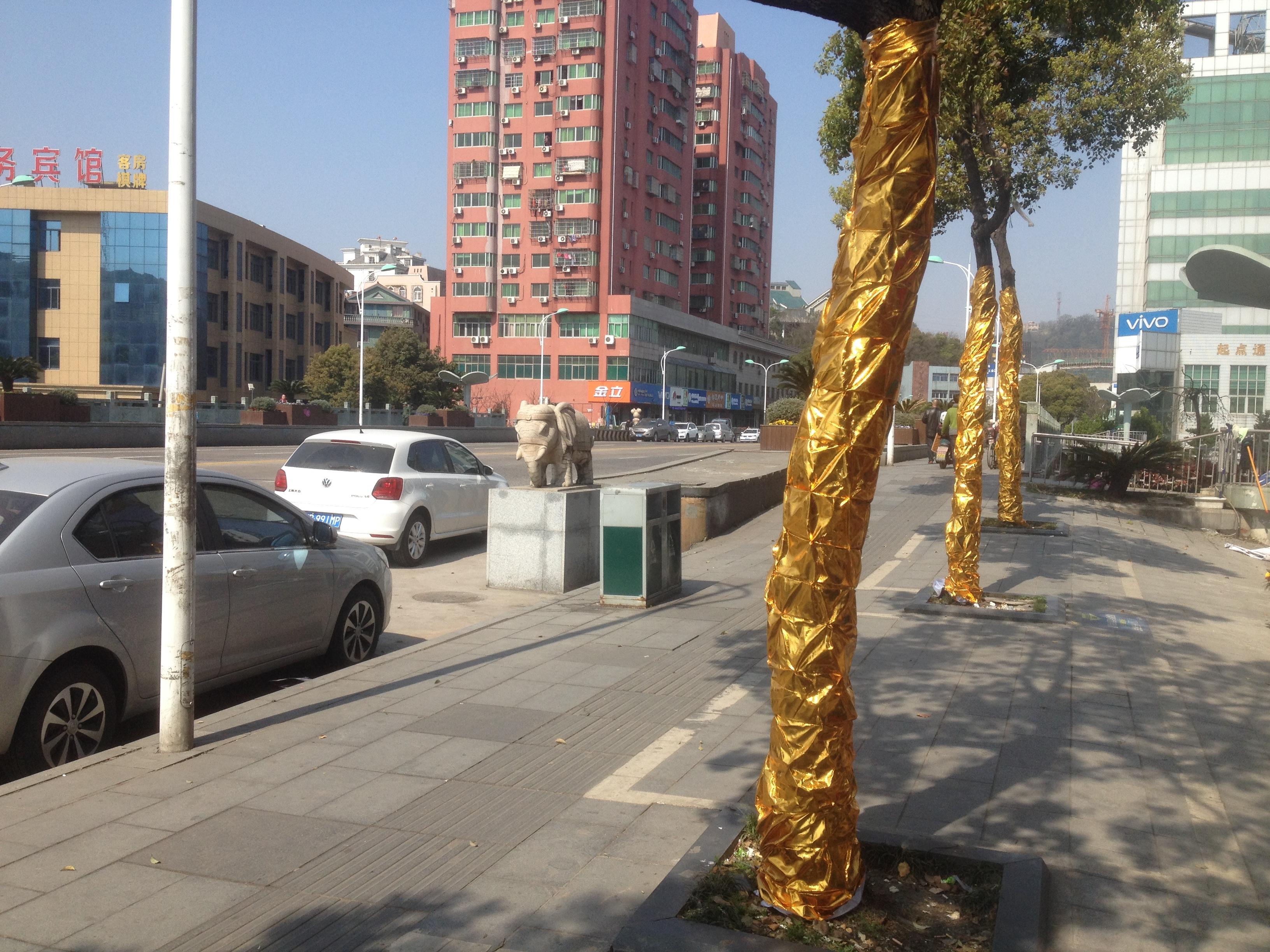 发现桥边的行道树被人用金色的装饰布进行了包裹,老远看去十分醒目.