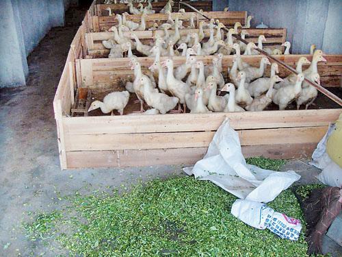 狗场犬舍设计图 养羊场羊舍 设计 图