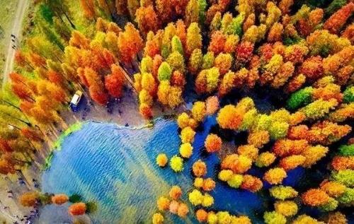 △四明湖红杉林图片