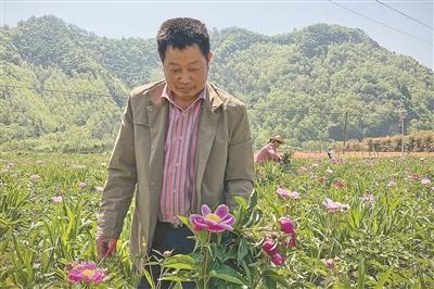 淳安吴峰村有个带头书记--他让村庄药香遍野