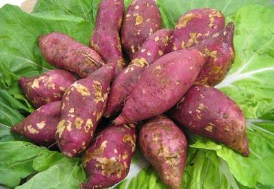 最适合冬天吃的蔬菜