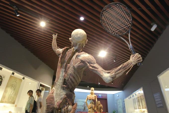 温州医科大学人体科学馆,几名学生正在馆内观看人体塑化标本《网球者》等展品。   对很多人而言,人体标本带有一种神秘的色彩。鲜为人知的是,在温州,就有一座以此为主题的科学馆。近日,温都记者走进温州医科大学人体科学馆,为大家揭开神秘的面纱。   现有2500余件藏品,原材料基本是捐赠的   这座人体科学馆的前身是一个200平方米的人体标本陈列室,于去年9月扩建,当年11月基本完工。扩建后的场馆面积达1200平方米,分成科教厅、专业厅和虚拟厅,目前有2500余件馆藏,展厅中一些大型的人体标本被设计成了打网球、