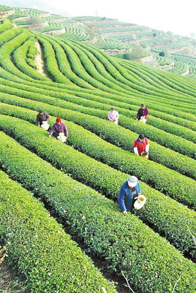 温州告别金融服务空白村